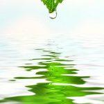 primeri-rastline-3