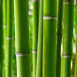 primeri-rastline-4
